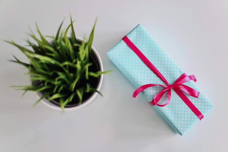 idea regalo ecosostenibile